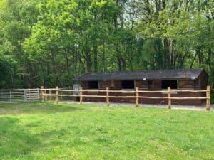 Equestrian pic 3