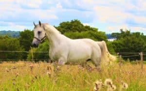 Equestrian pic 4