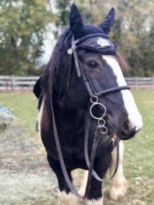 Equestrian pic 5